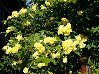 flower 109.jpg