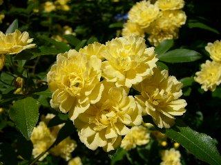 flower 111.jpg