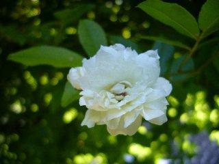 flower 113.jpg